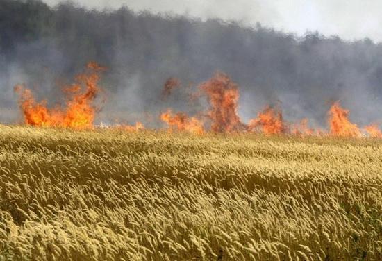 pozar_poljoprivreda